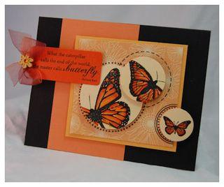 Butterfly_lauren